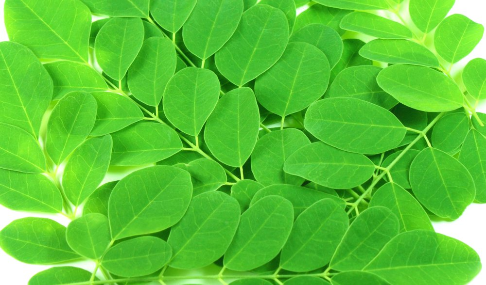 Moringa Oleifera leaves (Drumstick leaves)