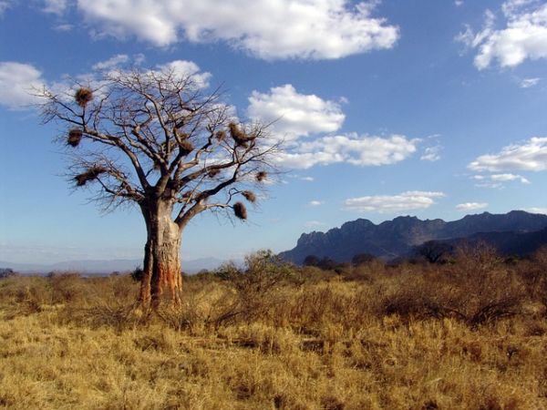 baobab tree The species that are endangered due to pollution